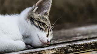 [NO Middle ADS]10 HOURS of Relaxing Music for Cats:: Healing/ Sleep Music/Going Out Music