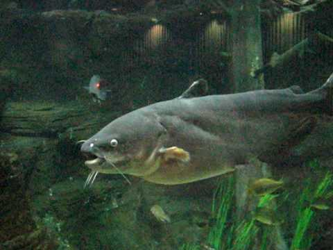 Texas Fish Hatchery Indoor Aquarium