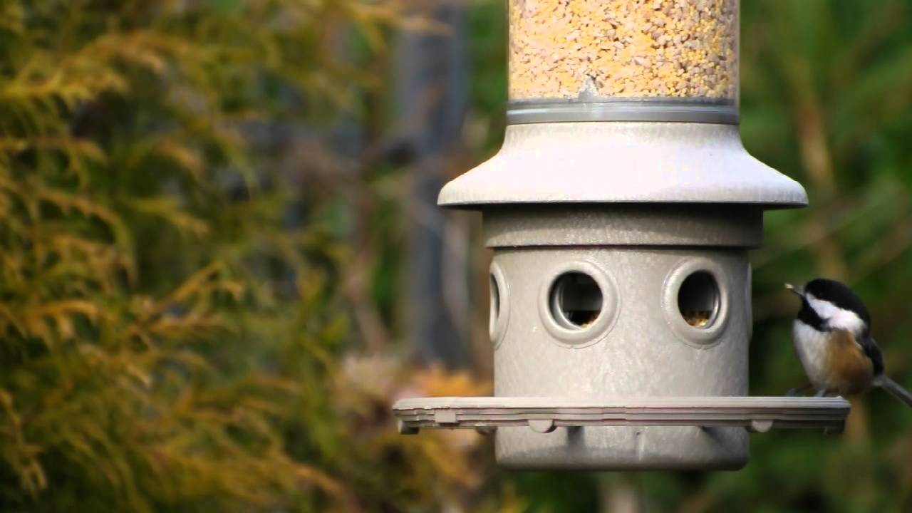 Permalink to 32 beautiful pics of Backyard Bird Watching