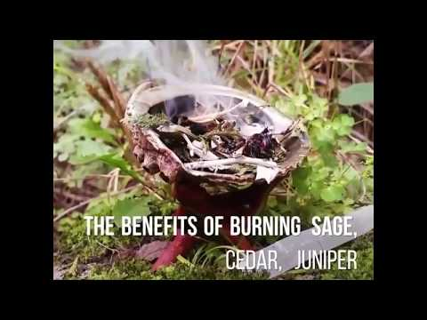 30 Sacred Herbs for Smudging and Cleansing Purposes