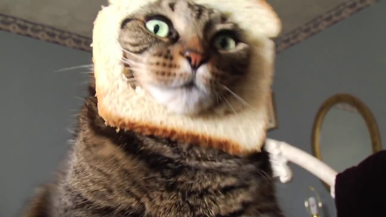 Cat In Bread Face Gif