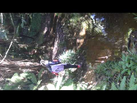 Tramping in the Kaimai Ranges in New Zealand