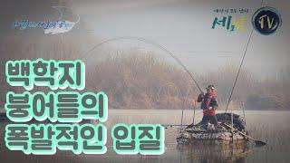 [세모낚TV]연천군 백학지 붕어들의 폭발적인 입질/박현…