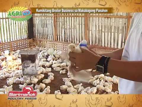 Kumikitang broiler business sa makabagong panahon