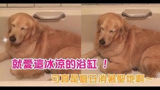 【萌寵】夏天就愛這冰冰涼涼的浴缸,這裡可真是夏日的消暑聖地啊~