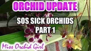 SOS Sick Orchids Part 1 - pest infestation and reasons for not using toxic fungicides