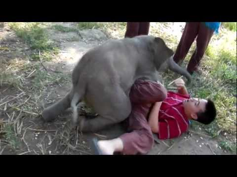 Baby Elephant Loves Cuddling with Arthur (Original)