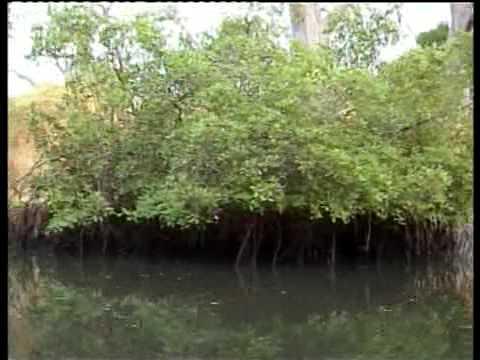 CRAM: la mangrove (delta du Saloum)