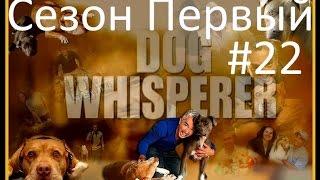 Переводчик с собачьего видео сезон 1 серия 22