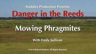 Mowing Phragmites with Emily Sullivan, Danger in the Reeds