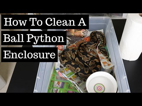 How To Clean A Ball Python Enclosure - Benjamin's Exotics