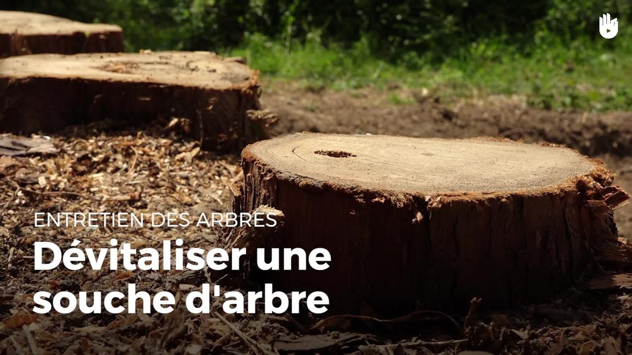 Table Basse Avec Souche D Arbre dévitaliser une souche d'arbre | entretenir vos arbres
