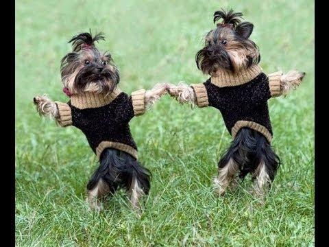 Приколы про животных,танцующие собаки (2014) смешные животные