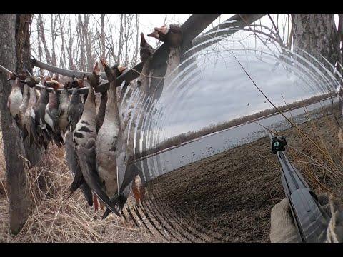 Охота на утку и гуся 2020 или будни на охоте