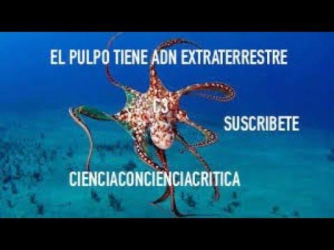 El pulpo tiene ADN extraterrestre /CienciaConcienciaCritica C3