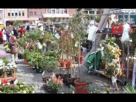 Flower Market in the Dutch City of Groningen
