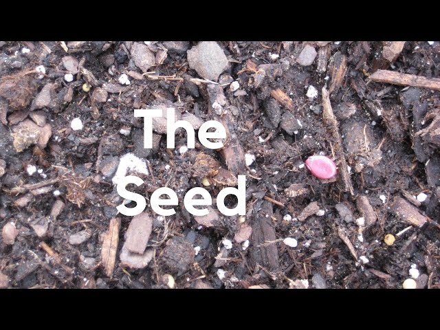 The Seed - A Children's Sermon from John 12:24