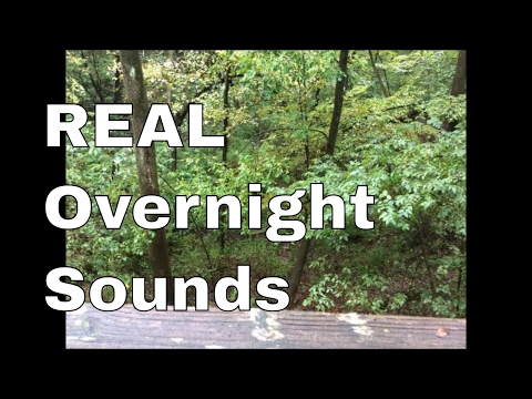 Overnight Sounds crickets and katydids in late summer Iowa
