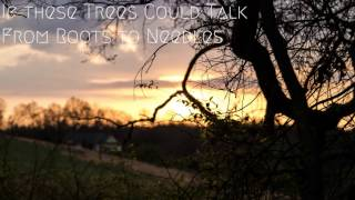 If These Trees Could Talk - From Roots to Needles [Post Rock]