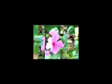 เพลงดอกไม้ ศุบุญเลี้ยง.3gp