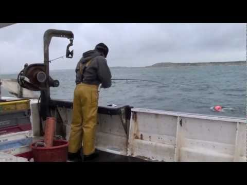 FY847 Carlee Sea Bass Rod And Line Fishing Method, Christchurch Bay Dorset