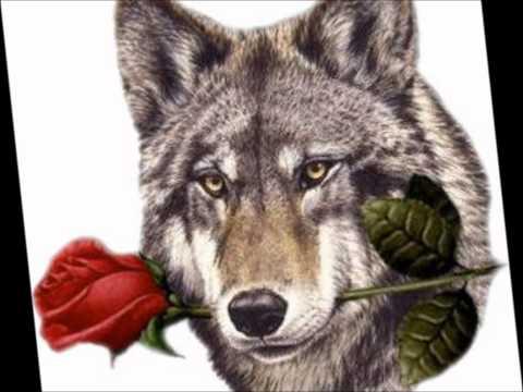 Lobo Domesticado - Tommy Olivencia