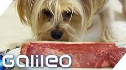 Platz 3: Das exklusivste Pet-Hotel der Welt | Galileo Lunch Break