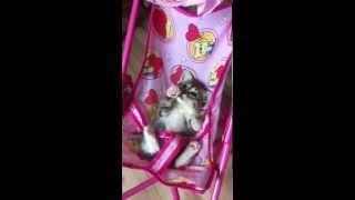 Котята в дар в Минске