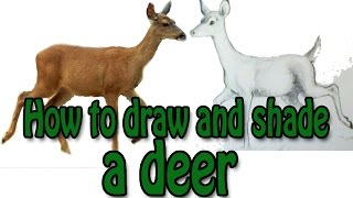 How to draw and shade a deer