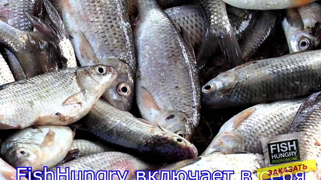 ловля рыб на феромоны