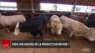 50% plus de production bovine au Québec, une bonne idée?
