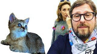 Анатолий Шарий, как управлять женой, как лечить котёнка