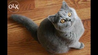Смешные кошки - приколы с кошками и котами 2018 || Funny cats 2018