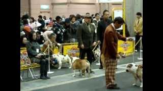 2009年12月13日 インテックス大阪で開催のインターナショナルドッグショ...