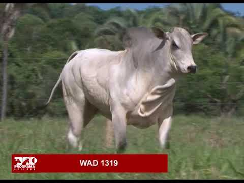 LOTE 72 - WAD 1319