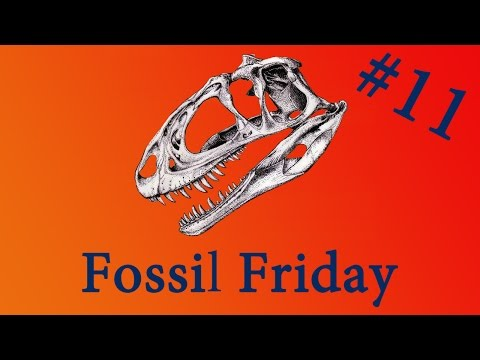 Fossil Friday #11 - Dakotaraptor - #FossilFriday
