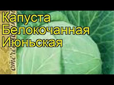 Капуста белокочанная Июньская. Краткий обзор, описание характеристик, где купить семена Iyun\'skaya