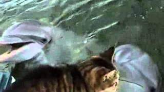 Котик и Дельфин удиви�...