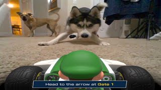 My Dogs Hate Luigi