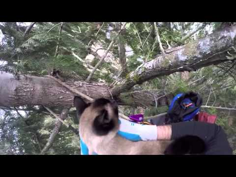 orbit s treetop rescue by canopy cat rescue youtube