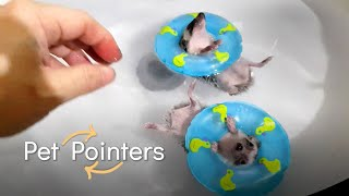 Taking Care of Small Pets | Pet Pointers