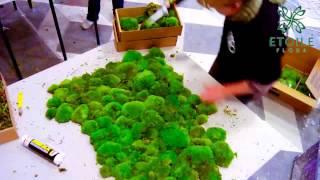 Видеоролик франшизы Etoile Flora:Зеленая стена из стабилизированного мха(, 2014-09-08T13:26:40.000Z)