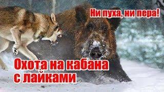 Охота на кабана с лайками, выпуск №56 (UKR)