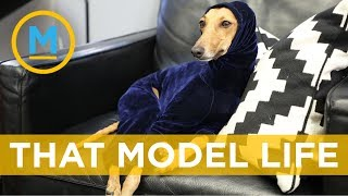 "How to make your pet ""instafamous"" 
