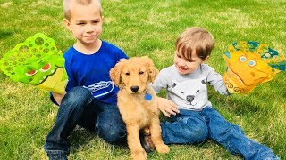 Golden Retriever PUPPY Plays With BUBBLES! Funny Dog