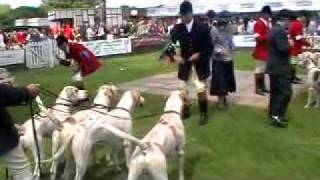South of England Foxhound Show.