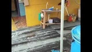 雪州沿海地区连续两天在清晨时分出现严重的涨潮导致吉胆岛、五条港以及大港港口等滨海区多个渔村成了一片汪洋