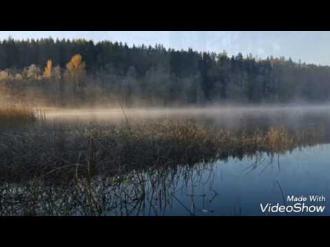 Älgjakt i Hälsingland, längtan till hösten!