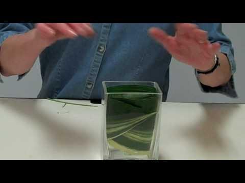 Design Tip Enhance A Glass Vase Design With Aspidistra Leaves Youtube