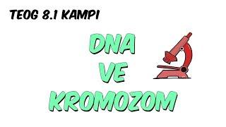 DNA ve Kromozom   TEOG 8.1 Kampı